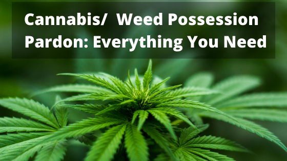 Weed Cannabis Possession Pardon